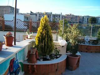 Il mio balcone: Piante del terrazzo di Antonio da Foggia