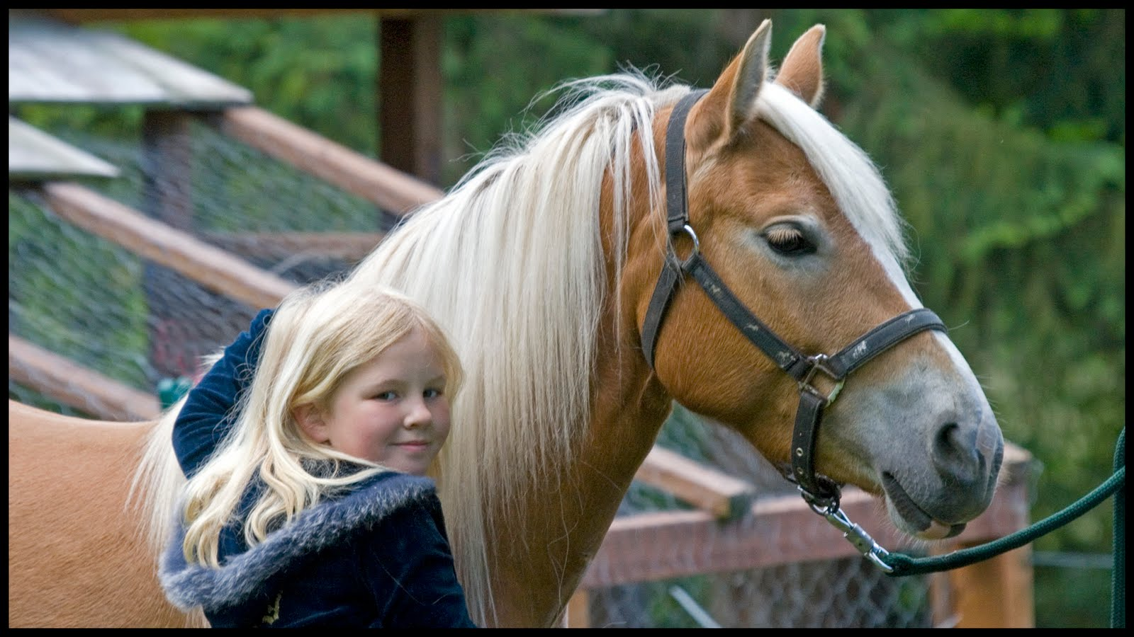 Favorite Whats a good breed of horse for a Beginner? - The Horse Forum HS17