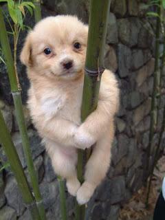 El perro es más gracioso y decente que un hombre en tanga