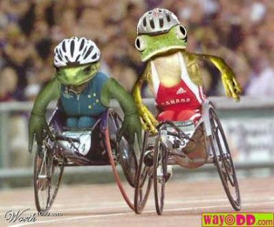 http://bp1.blogger.com/_7lVdMls5uOs/SDGwVtc4YkI/AAAAAAAABG0/qjJAM49rJCo/s400/frogs_on_wheelchairs.jpg