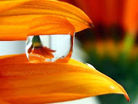 Raindrop on flower petals