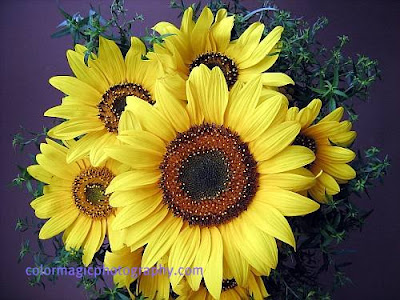 Sunflower-bouquet