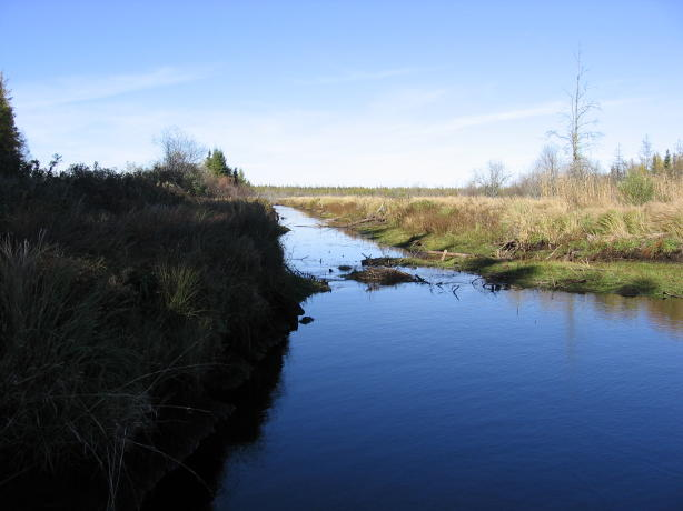 Draining the Big Bog for peat mining