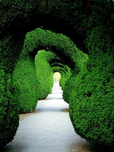 Beautiful Examples Of Green Photography