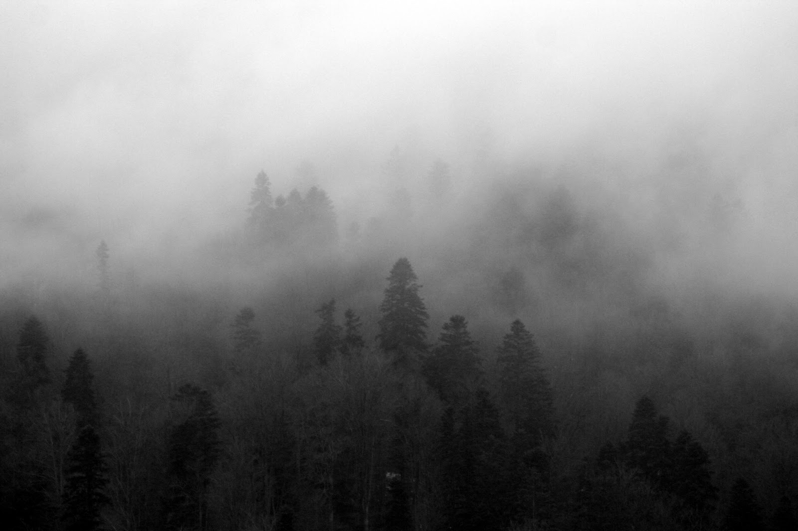 foggy forest by a - photo #17