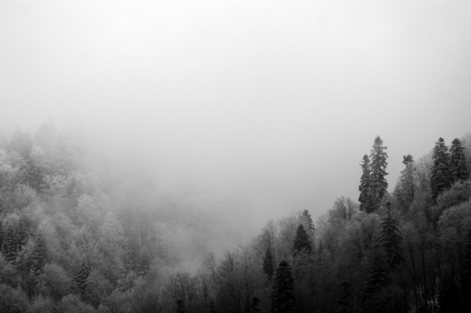 foggy forest by a - photo #32