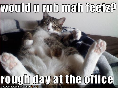 Image result for thursday cat images
