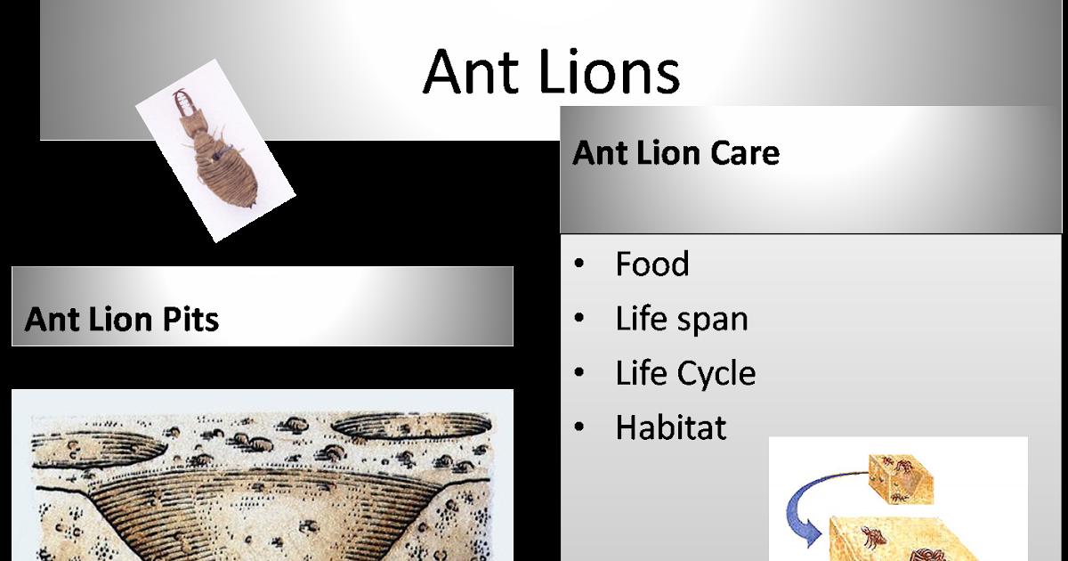 Explore Science Beyond the Classroom: Ant Lions Grrrr