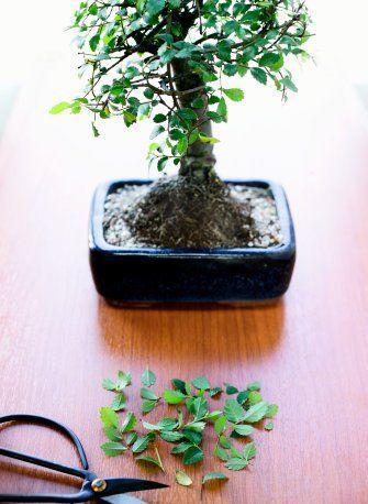 [bonsai.jpg]