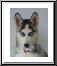 Mari (Husky Siberiano)