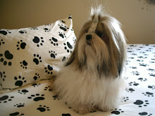 Billy (Shih Tzu)