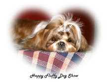 Happy (Shih Tzu)