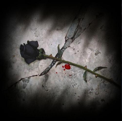 [rosa+de+sangue.jpg]
