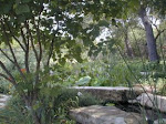 Draco Gardens