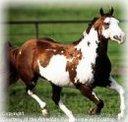 cavalo parceiro inseparável do gaucho