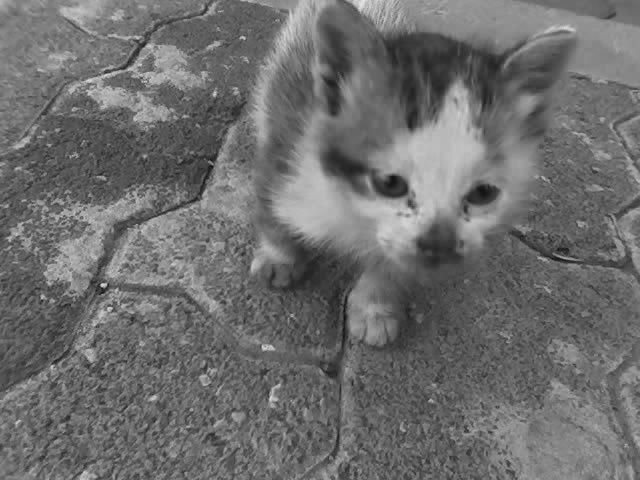 df87b9466 Gato. Gato nací. La voz de una estrella llovió con la palabra gato sobre el  vientre de mi madre y por eso mi naturaleza es gatuna.
