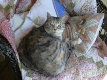 Debbie the Shop Cat