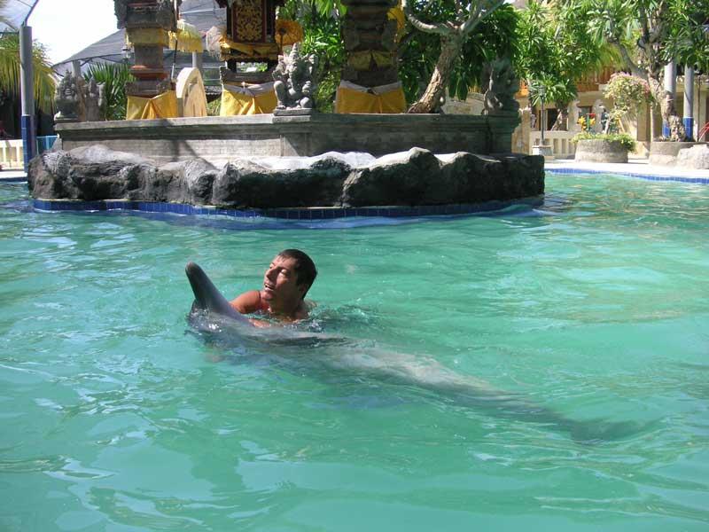 [dolphin800.jpg]