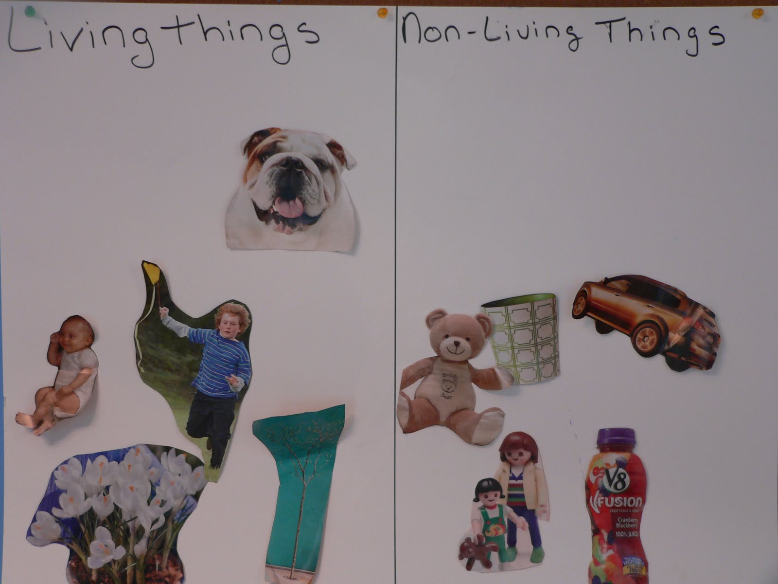 Preschool Mommy Living Vs Non Living Things