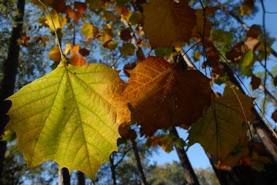 Frank's photo of fall foliage