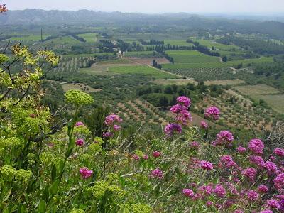 Provincial landscape from Les baux