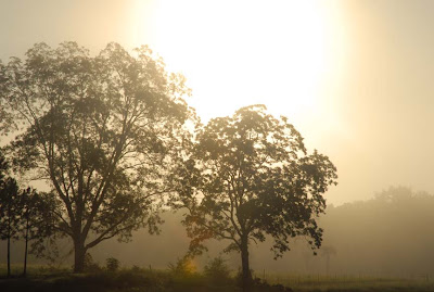 Frank's photo of sun cutting through fog