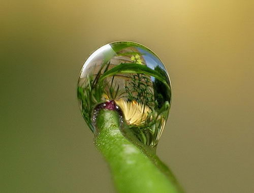 Something Amazing Amazing Dew Drops Photos 30 Pics