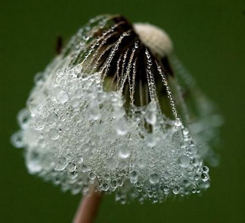 Something Amazing Amazing Dew Drops Photos 30 Pics