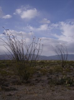 [ocotillo+and+clouds.jpg]