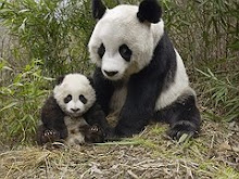 ANIMALES DE CHINA