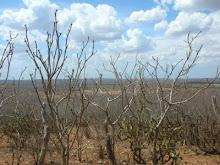 Paisagem do Semí-árido (2008) - Cabaceiras - PB