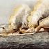 La batalla de Hampton Roads