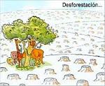 Hay que reforestar: Siempre