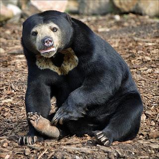 Fauna Asiatis  GUDANG ARTIKEL