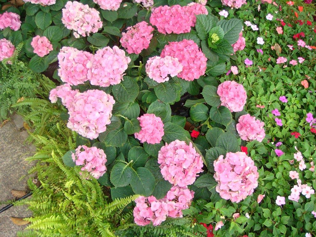[flower001.jpg]