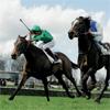 Image de chevaux pour le jeu Huuue!