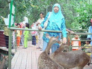 Beloved wife patting the Deer's head