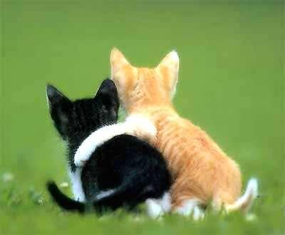 cats in love - Avatar Bulmaca