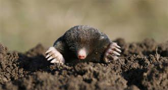I Ve Got A Mole In My Hole Crunchy Chicken