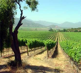 Costo en producción de vinos aumentó cien por ciento en cinco años