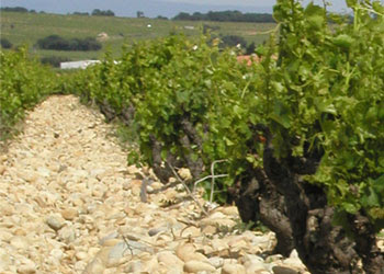 cailloux brunel chateauneuf