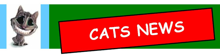 CATS NEWS