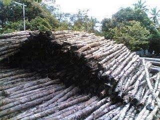 Media Informasi Kota Satui: Tanaman Khas Kalsel
