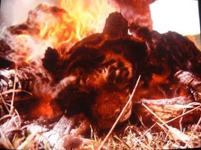 Tiger skin burning