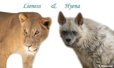 Lioness and Hyena