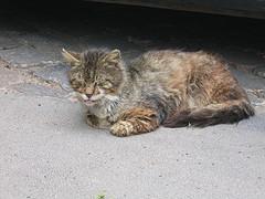 Katze Zu Dünn