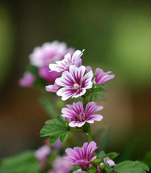 http://1.bp.blogspot.com/_9Cm3Eq6z6z8/TIiEl7MHLwI/AAAAAAAAAW0/Mf9V2VLbzhU/s1600/flower112.jpg
