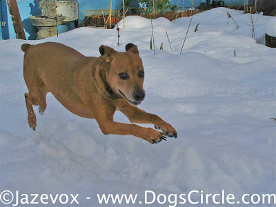 cute dog photography in the snow dogs picture dogs pictures animal images animals image