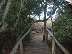 Puente en el bosque húmedo