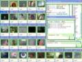 CamFrog Conversas por webcam em salas cheias de pessoas!
